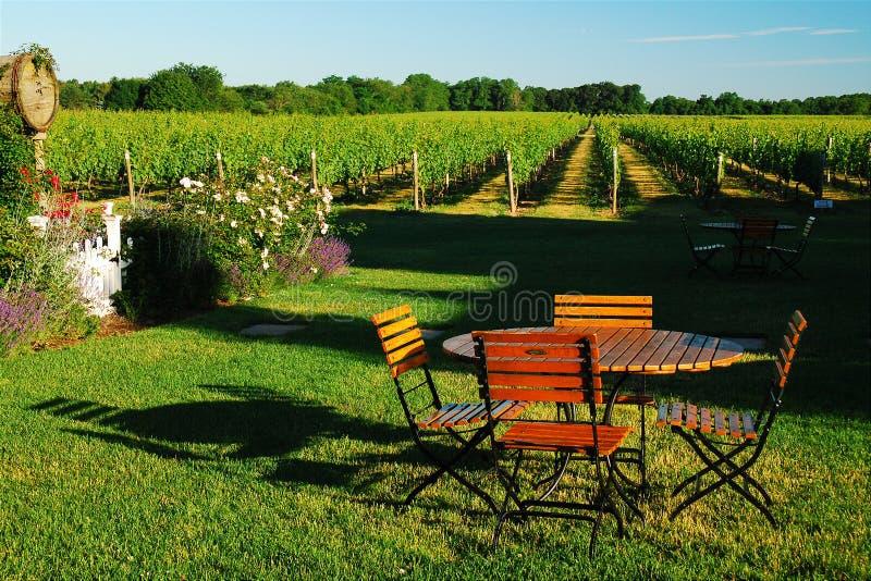 Pique-nique dans l'établissement vinicole photo libre de droits