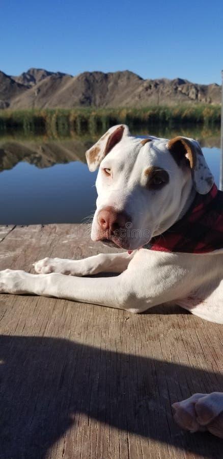 Pique-nique de ranch de cucapah de Baja - un chien images libres de droits