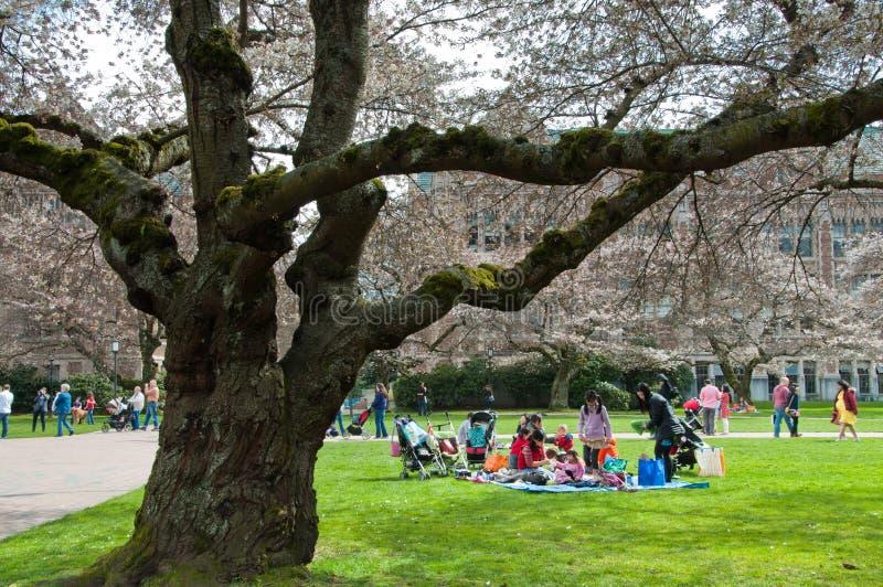 Piquenique por árvores de cereja de Universidade fotos de stock royalty free