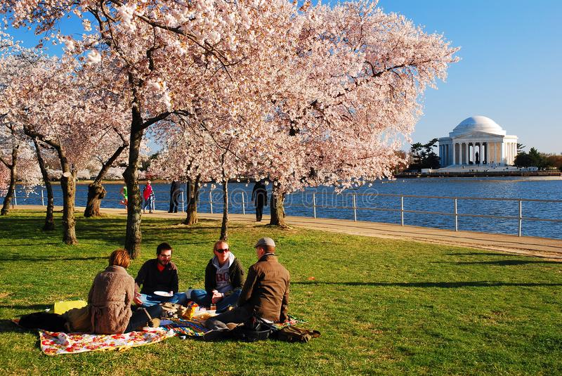 Piquenique sob Cherry Blossoms no Washington DC foto de stock