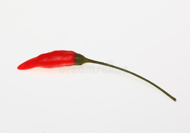 Piquin chilipeppar, annuum paprika arkivbild