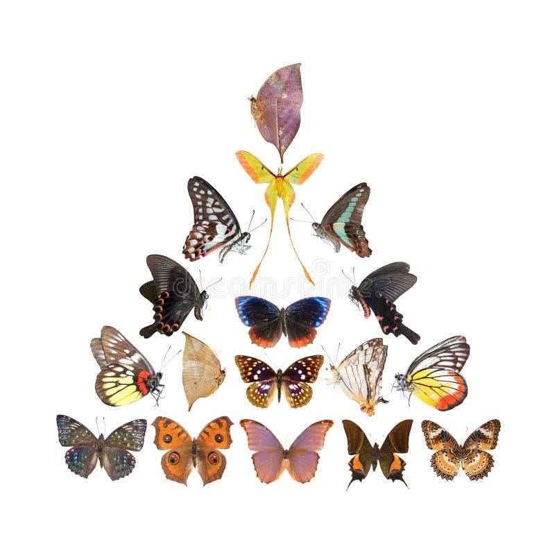 Pirámide de la mariposa ilustración del vector