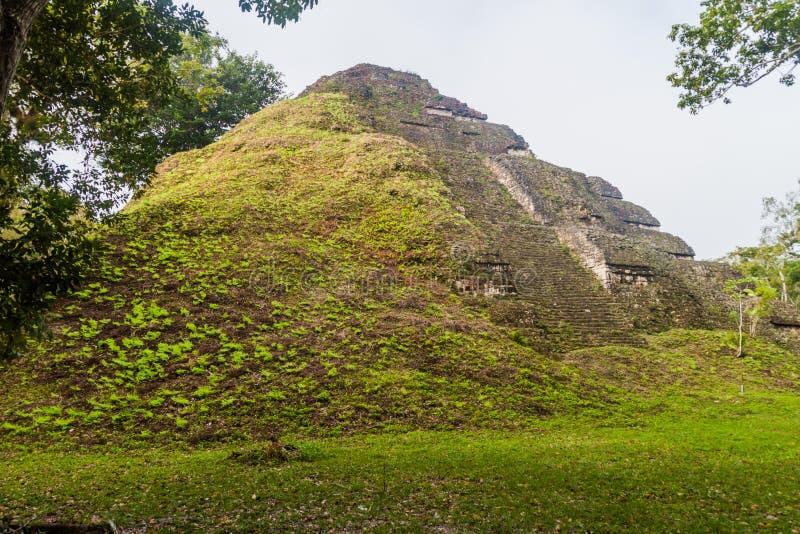 Pirámide en el sitio arqueológico Tikal, Guatema imagen de archivo libre de regalías
