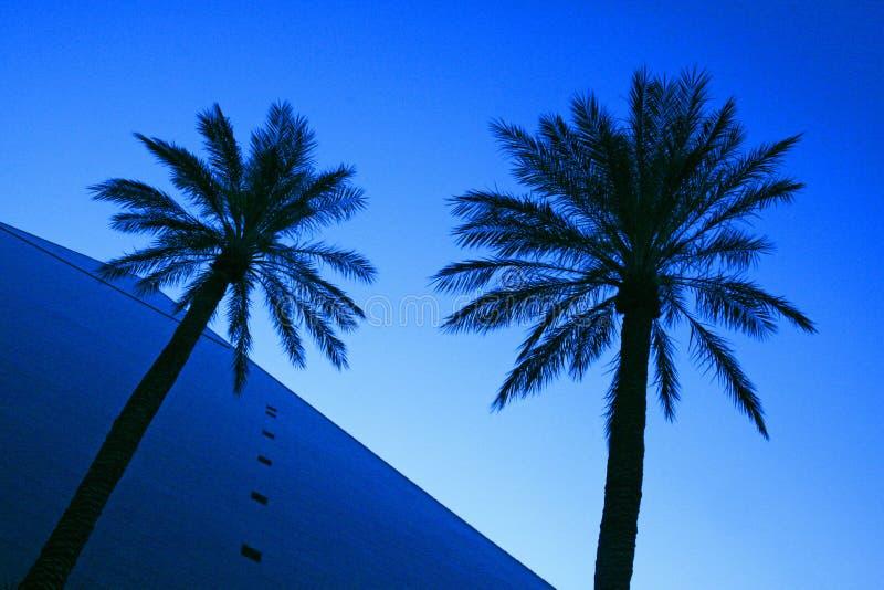 Pirámide y palmeras imagen de archivo