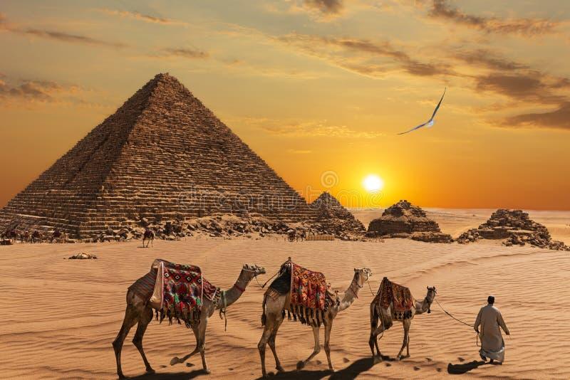 A pirâmide de Menkaure e os três companheiros da pirâmide, os camelos e os beduínos no deserto fotos de stock