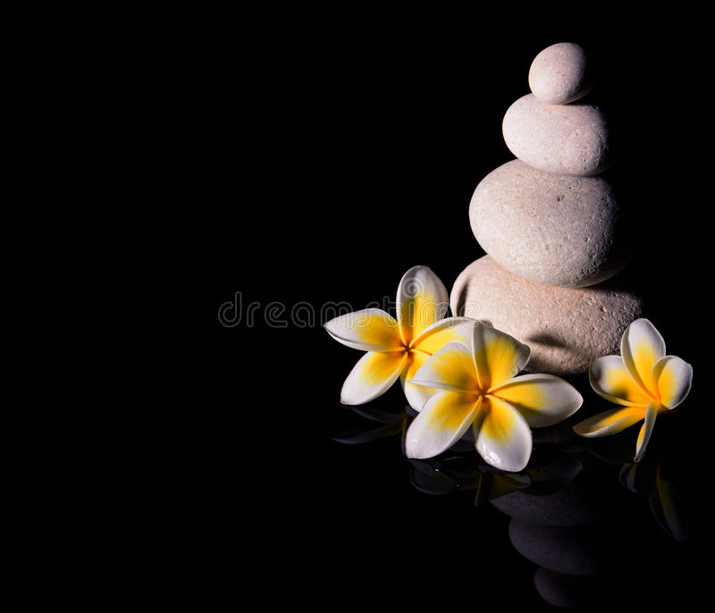 A pirâmide de pedra do zen com plumeria delicado branco do frangapani três floresce após a chuva no fundo reflexivo preto Baixo k fotos de stock royalty free