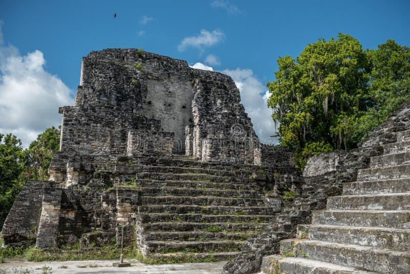 Pirâmide e o templo no parque de Tikal Objeto Sightseeing na Guatemala com templos maias e ruínas do Ceremonial Tikal é um antigo fotos de stock royalty free