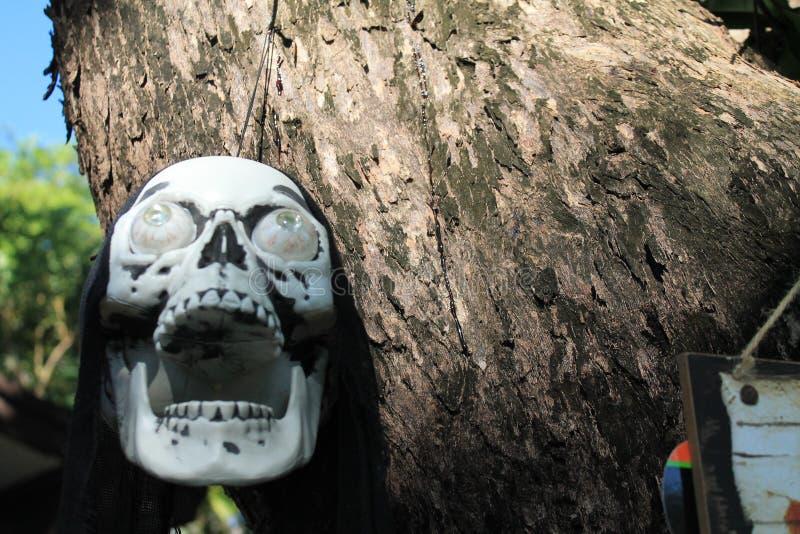 Piraatschedel het hangen van een boomclose-up stock afbeelding