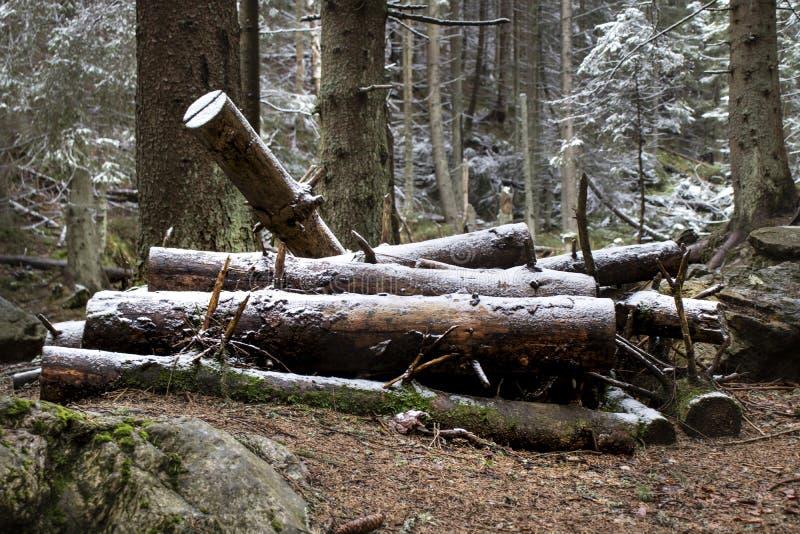 Piramide di legno nella foresta immagine stock