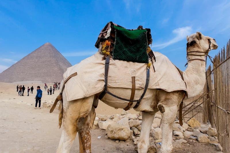 Piramidi di Giza Grandi piramidi dell'Egitto La settima meraviglia del mondo Megaliti antiche immagine stock