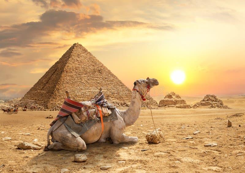 piramidy w gizie zdjęcie stock