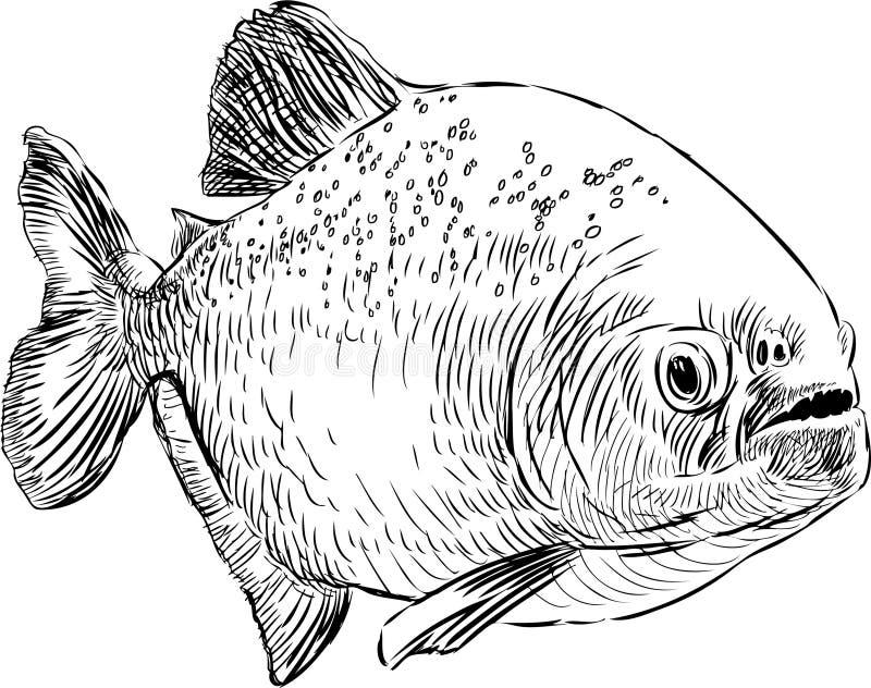Piranha illustration libre de droits