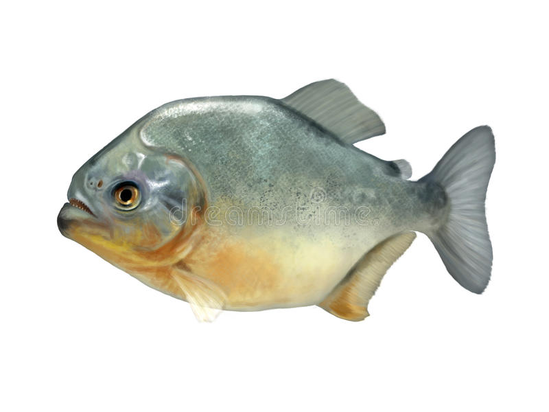 Piranha stock illustrationer