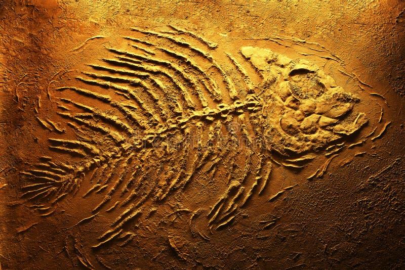 Piranha skeleton stock photos