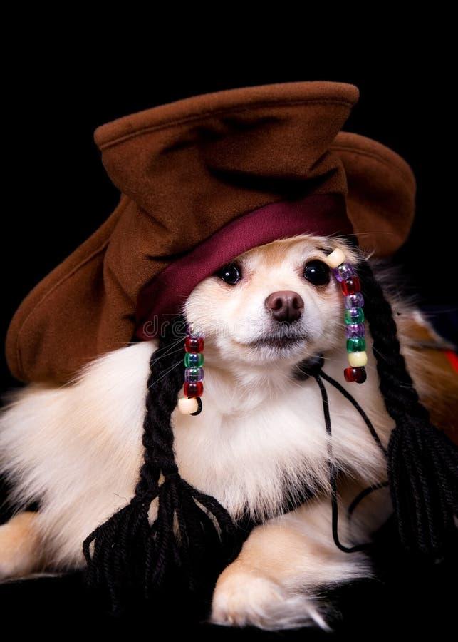 Pirata di Pomeranian fotografia stock