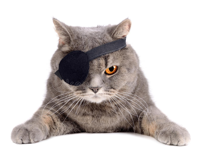 Pirate cat royalty free stock image