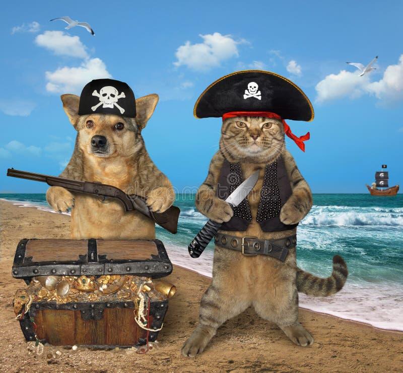 Pirate de chien et de chat près des trésors 2 image stock