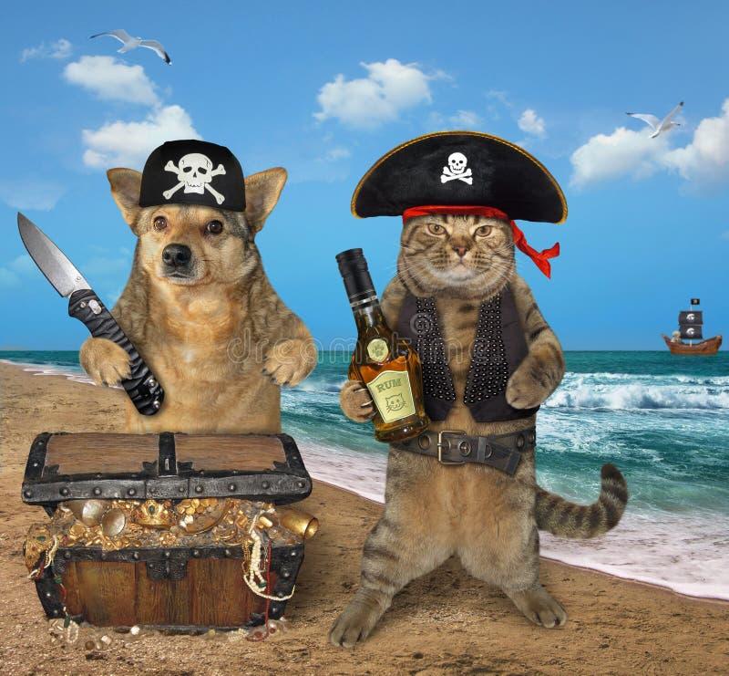 Pirate de chien et de chat près des trésors photographie stock libre de droits