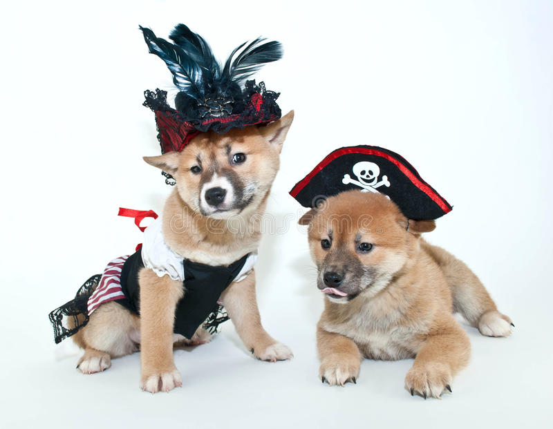 Puppy Pirate Wouldn't Hurt a Fly (well, a moth anyway!) - YouTube