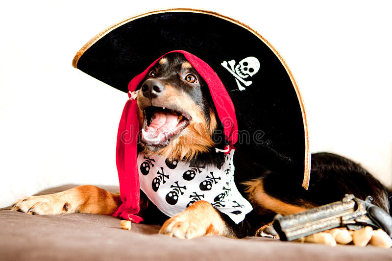 Amazon.com : Pet Pirate Hat, Small/Medium : Pet Supplies