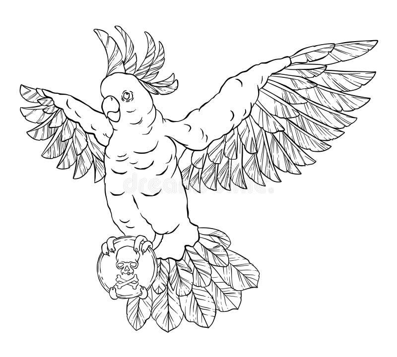 Piratee el loro en vuelo con alas extendidas y una marca negra en sus patas ilustración del vector