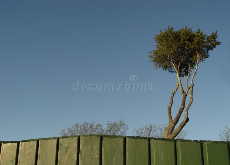 Download Piratenbaum stockbild. Bild von himmel, bäume, krone, wind - 27055