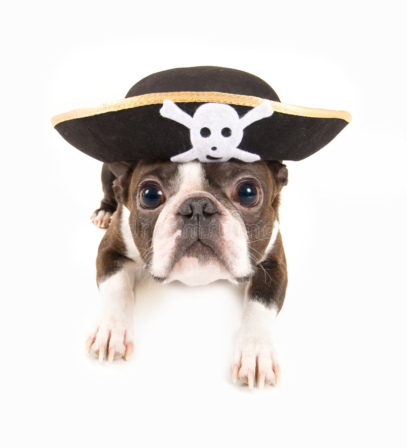 Piratenhund lizenzfreies stockbild
