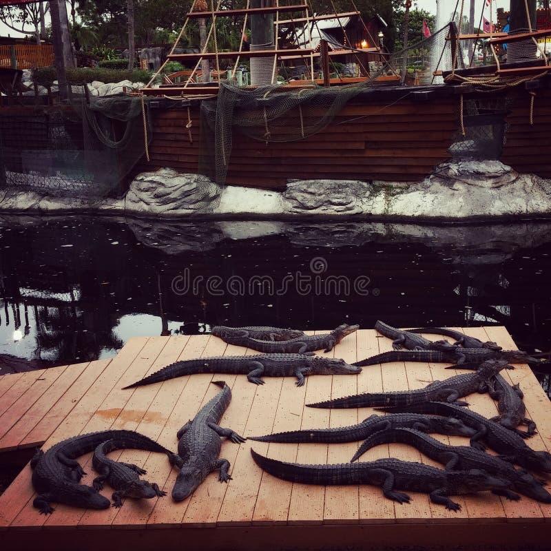 Piratenschiff und -alligatoren stockfotos