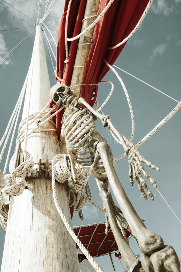 Pirates. Close up view of human skeleton hanging out in summer environment stock photos