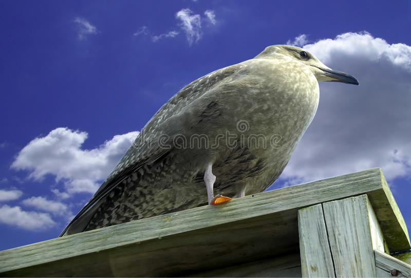 Pirched Bird Stock Images