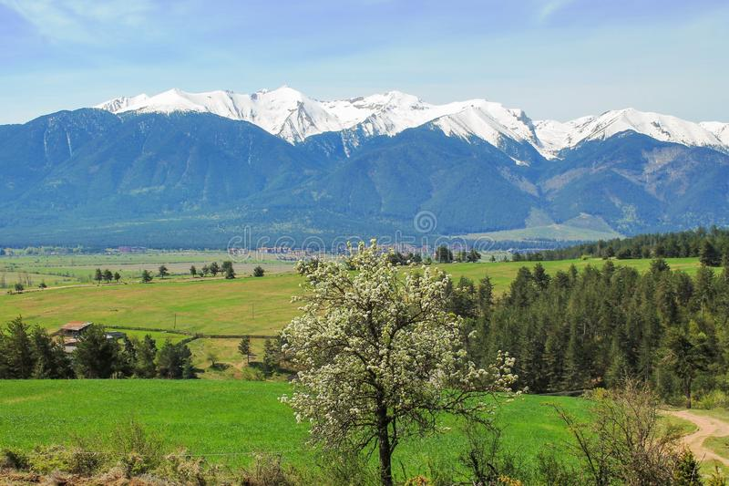 Pirin-Schneespitzen-Gebirgspanorama und blühender Baum im Frühjahr Bansko, Bulgarien stockfotos