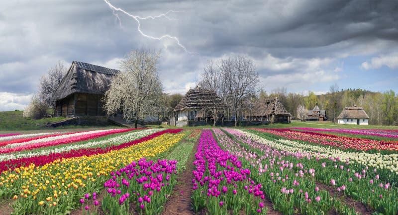 Pirogiv在一个春日 免版税库存图片