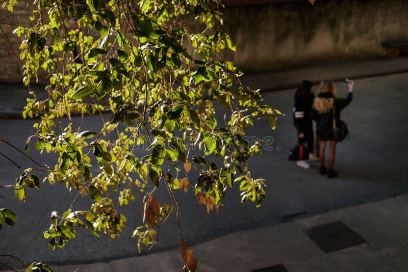 Pisa, Italia - 26 febbraio 2017: Giardino Scotto a Pisa immagine stock libera da diritti