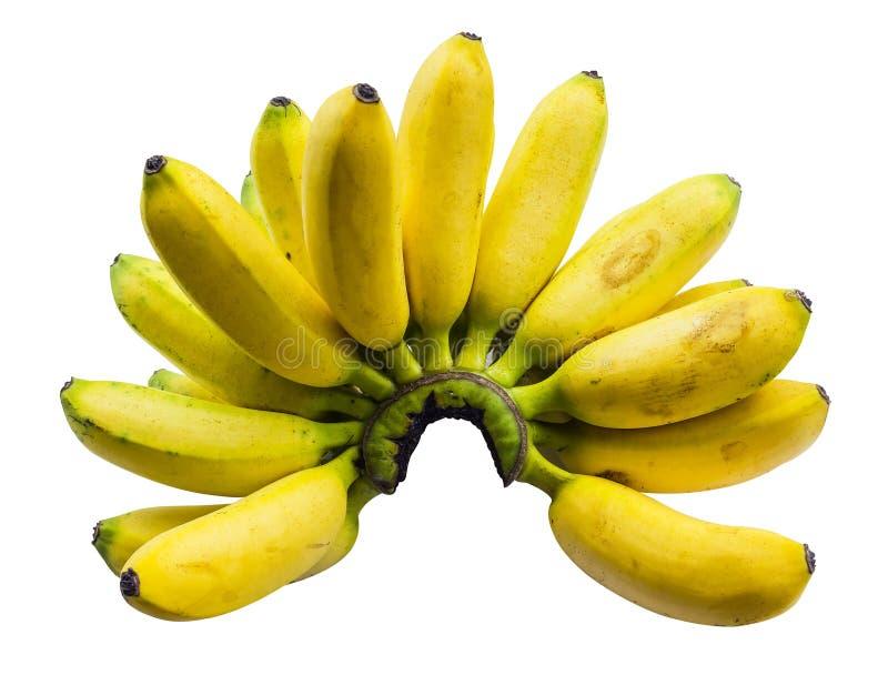 Pisang Mas香蕉 库存照片