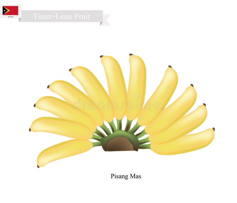 Pisang Mas or Golden Banana, Popular Fruits in Timor-Leste. Timor-Leste Fruit, Illustration of Pisang Mas or Golden Banana. One of The Most Popular Fruits in stock illustration