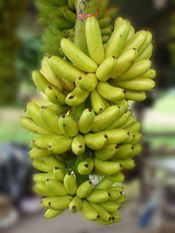 Pisang Mas or lady finger banana royalty free stock image