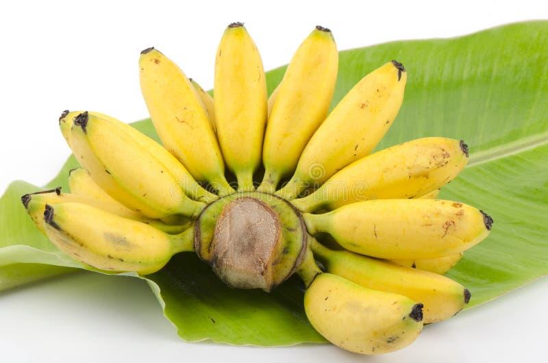 Pisang Mas tajlandzki imię owoc Tajlandia na bananowych liściach Kluai Khai. (Musa acuminata) fotografia royalty free