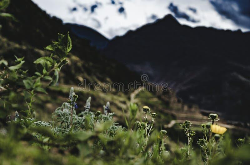 从Pisaq的顶端山的看法  免版税图库摄影