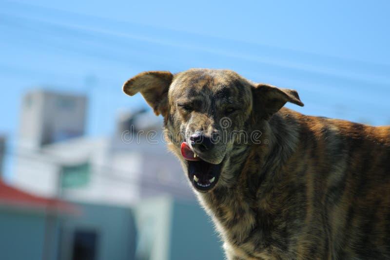 Piscadela do cão imagens de stock