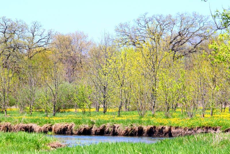 Piscasaw Fen Conservation Area Illinois. Spring flowers bloom at Piscasaw Fen Conservation Area in northern Illinois royalty free stock photos