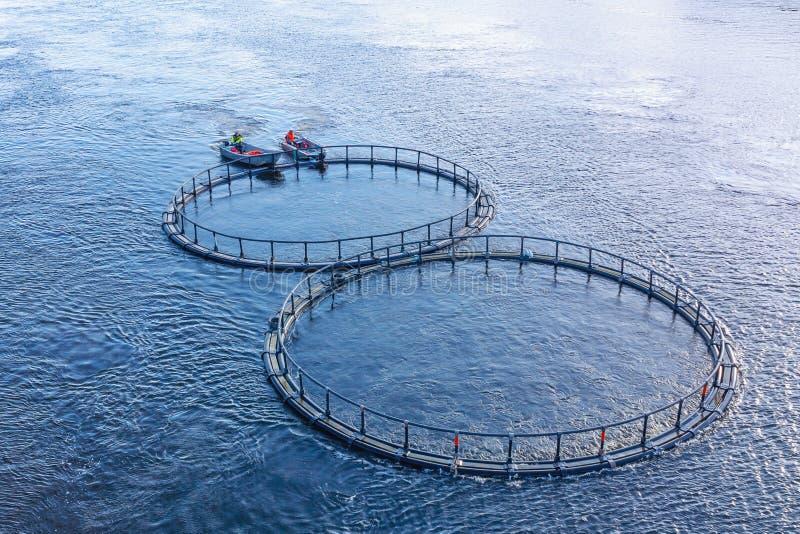 Piscicultura no rio Homens na balsa do barco a gaiola com peixes a um lugar novo imagens de stock royalty free