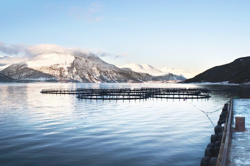 Pisciculturas em Noruega do norte fotografia de stock