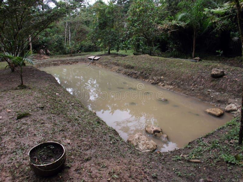 Pisciculture τροπικό δάσος δασική γηγενής κοινοτική σίτιση του Ισημερινού, Αμαζόνιος στοκ εικόνες