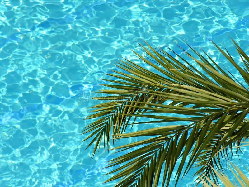 Piscina de la palma y de agua fotografía de archivo libre de regalías