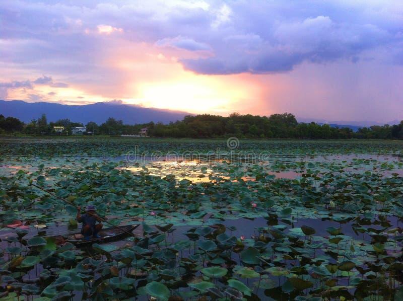 Piscina de Lotus foto de archivo
