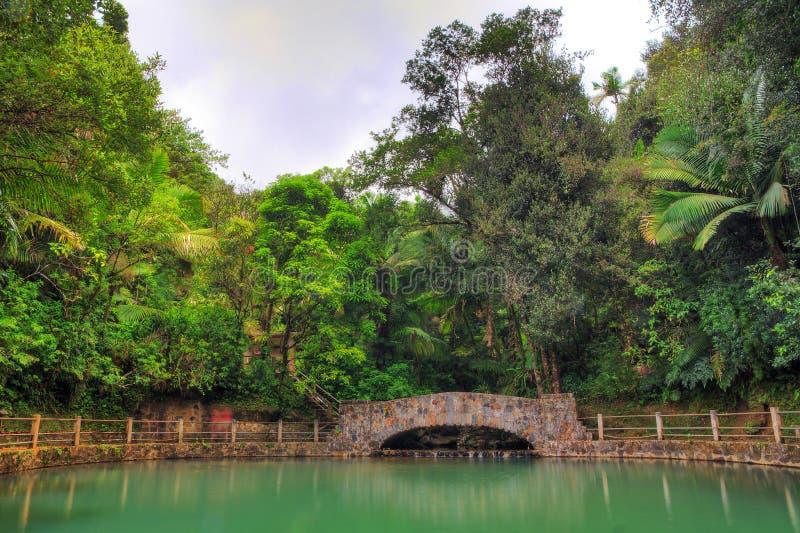 Piscina del EL Yunque fotos de archivo libres de regalías