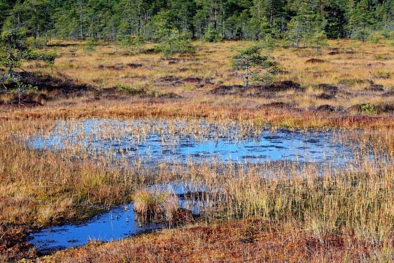 Piscina del pantano en el pantano aumentado fotos de archivo