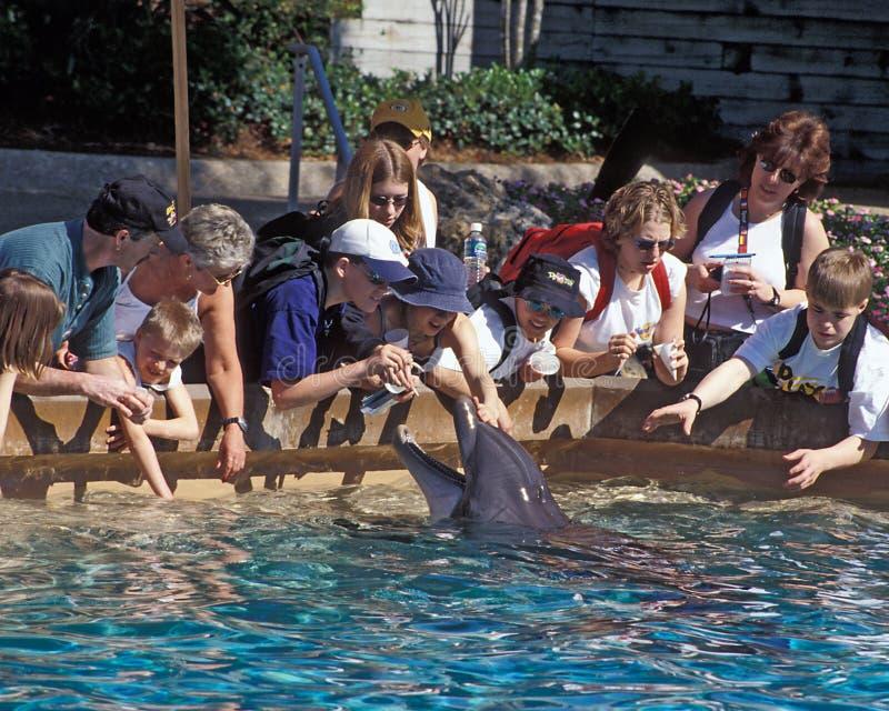 Piscina del tacto del delfín del mundo del mar - Orlando imagen de archivo libre de regalías