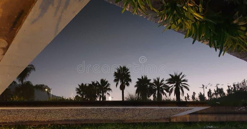 Piscina espejo parque. Una foto tomada al revés, está invertida, es la foto del reflejo de unas palmeras sobre una piscina stock images