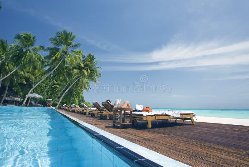 Piscina tropical fotos de stock